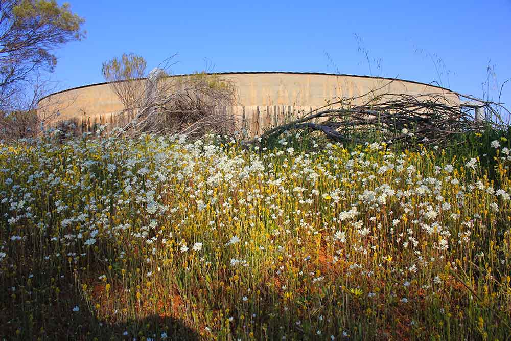 a photo of Beacon landmark Crimpy's Tank reservoir with wildflowers in foreground